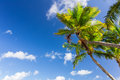 Palm tree under blue sky Royalty Free Stock Photo