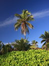 Palm tree and vegitation Stock Image