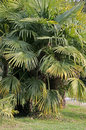 Palm tree view on in park Stock Image