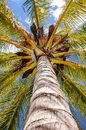Palm tree viewed from below upwards high above