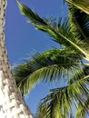 stock image of  Palm tree