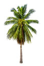 Palm tree in white isolated background with rich detail Stock Photography
