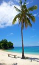 Palm tree on white sand tropical beach on Malapascua island, Philippines Royalty Free Stock Photos