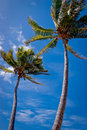 Palm trees against blue sky Royalty Free Stock Images