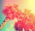 Palm trees against sky vintage frame with tropic Stock Photography