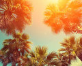 Palm trees against the sky vintage frame with tropic at sunset light Stock Photography