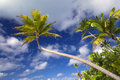 Palm trees aitutaki cook islands one foot island Royalty Free Stock Photos