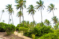 Palm trees at aldeia dos hippies in bahia brazil Royalty Free Stock Photography