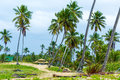 Palm trees at aldeia dos hippies in bahia brazil Stock Images