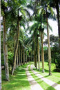 Palm trees alley Royalty Free Stock Photo