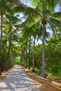 Palm Trees Alley, Key Biscayne Stock Images