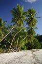 Palm trees at Anse Gaulettes, Seychelles Royalty Free Stock Photography