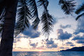 Palm trees on the background Royalty Free Stock Photo