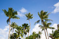 Palm trees on the background of blue sky Royalty Free Stock Photo