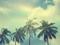 Palm trees on the background of sky image with retro toning Royalty Free Stock Photo