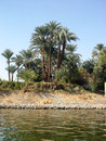 Palm trees on the banks of the Nile Royalty Free Stock Photo