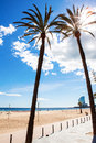Palm trees on the beach barcelona Stock Photography