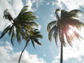 Palm trees on the beach. Brazil