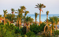 Palm trees on the beach in egypt red sea Stock Images