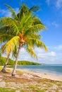 Palm trees on the Beach in FLorida Keys near Miami Royalty Free Stock Photo