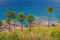 Palm trees on the beach on the island of phuket in thailand Stock Photography