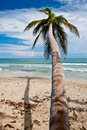 Palm trees on the beach near with blue sky Stock Images