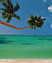 Palm trees beach of paradise lagoon . Royalty Free Stock Photo