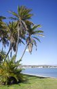 Palm trees at the beach in San Diego Stock Images