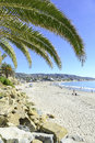 Palm trees at the beach on sunny day Royalty Free Stock Photography