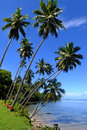 Palm trees on a beach, Vanua Levu island, Fiji Royalty Free Stock Image