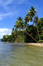 Palm trees on a beach, Vanua Levu island, Fiji Royalty Free Stock Images