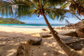 Palm trees on beautiful beach at Seychelles, Mahe Royalty Free Stock Photo