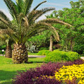 Palm trees in a beautiful park tropical Stock Photography