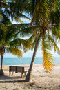 Palm trees and bench an empty wood looking at the ocean Royalty Free Stock Photos