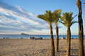 Palm trees on benidorm beach sunny early morining landscape costa blanca spain Stock Photos