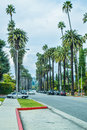 Palm trees at Beverly Gardens Park. Royalty Free Stock Photo