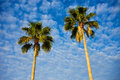 Palm trees before blue sky with few clouds Royalty Free Stock Photo