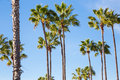 Palm Trees and Blue Sky Royalty Free Stock Photo