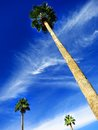 Palm trees in bluw sky blue with clouds on summer day Stock Photography