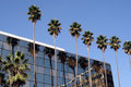 Palm trees and building Royalty Free Stock Photo