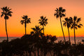 Palm trees at California Beach. Royalty Free Stock Photo