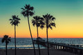 Palm trees at California Beach. Vintage processed. Royalty Free Stock Photo