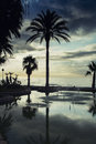 Palm trees, clouds and sunset Royalty Free Stock Photo