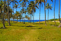 Palm trees at the coast south pacific easter island polynesia chile Stock Images