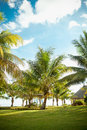 Palm trees coconat park landscape Stock Images