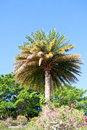 Palm trees coconat park landscape Royalty Free Stock Images
