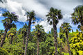 Palm trees and cypresses Royalty Free Stock Photo
