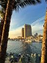 Palm trees framing city skyline and boat marina, San Diego, California, USA Royalty Free Stock Photo