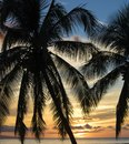 Silhouette Palm Trees before Orange Cloudy Sunset Sky over Ocean Royalty Free Stock Photo