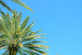 Palm trees fronds framing a bright blue sky in horizontal orientation with copy space for text Stock Photos